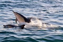 Delphine auf unserem Weg